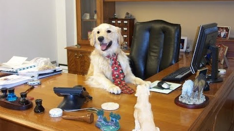 Why We Should All Bring Our Dogs To Work - Dogtime
