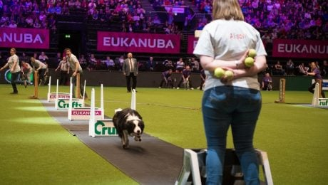 Everything You Ever Wanted To Know About the Crufts Dog Show–And More!
