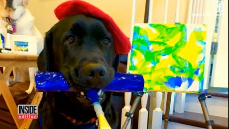 Dog Drops Out Of Service Dog Class To Become A Painter