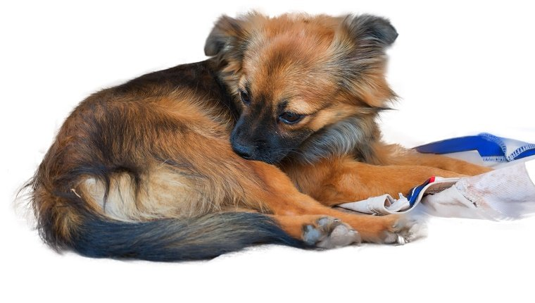 A dog licks his hind leg, but, like, you know where he's going next.