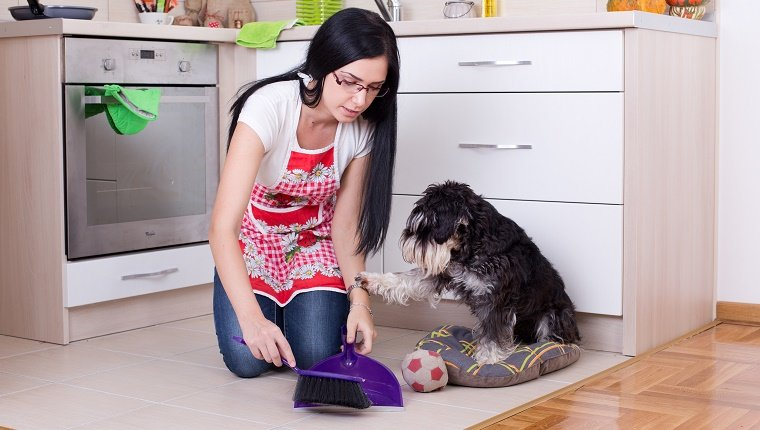 """A woman sweeps dog poop into a dust pan in her kitchen while her dog places a paw on her arm as if to say, """"No, leave it. It is my gift to you."""""""