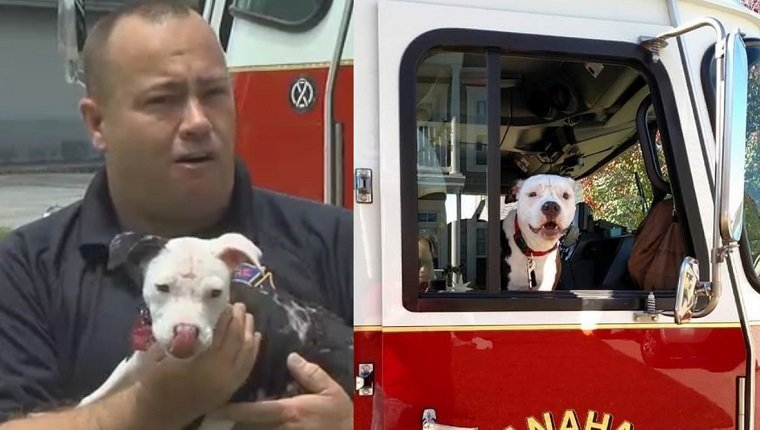 On the left, firefighter Linder holds Jake as a puppy. On the right, Jake has grown up and sits in a firetruck.