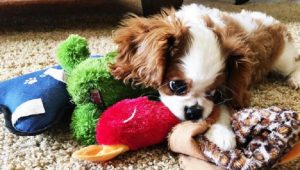 40 Adorably Cute Puppies