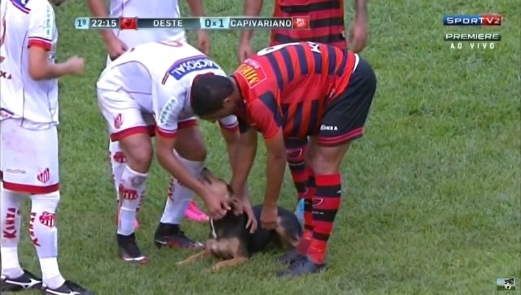 Players bend down to pet the dog.
