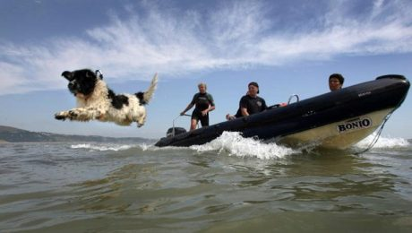 Newfoundland Dog Honored For Saving Drowning People