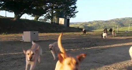 Charging Pack Of Happy Dogs [VIDEO]