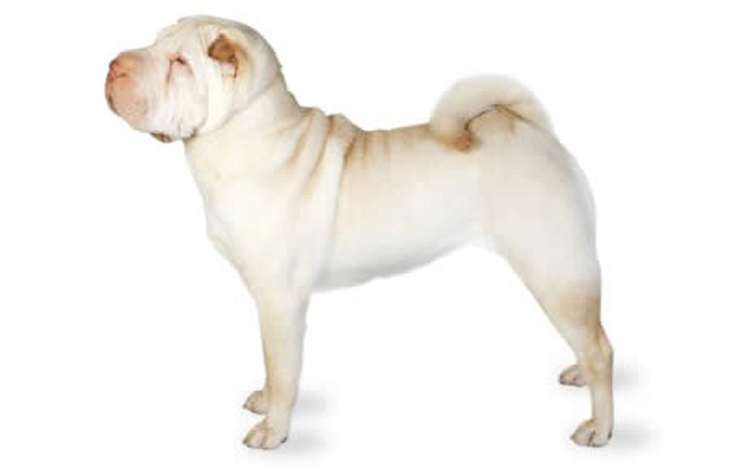 top 21 dogs that don u0026 39 t shed