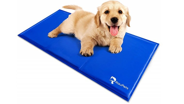 dog on cooling pad