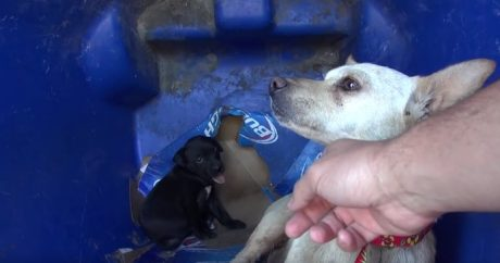 Mama Dog And Puppy Living In Recycle Bin