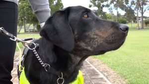 International Guide Dog Day: 10 Inspirational Guide Dog Stories [VIDEO]