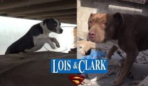 2 Sweet Pit Bulls Rescued From Truck Yard By Hope For Paws [VIDEO]