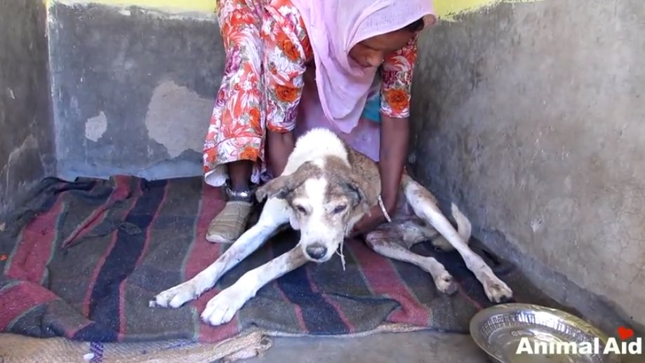 Animal Aid helping-sick Sick, Injured Elderly Dog From Streets [VIDEO] - Dogtime