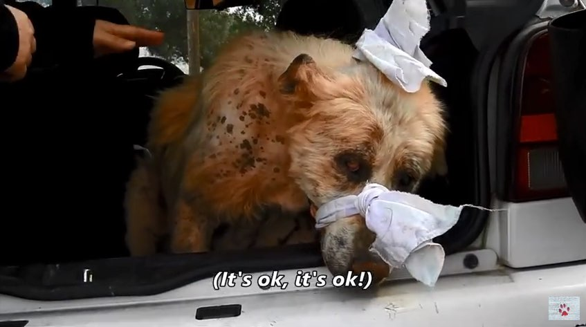 Dramatic rescue of a dog that had lost all hope - YouTube