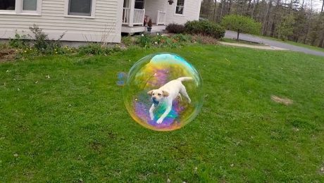 26 Mind-Bending Dog Optical Illusions [GALLERY]