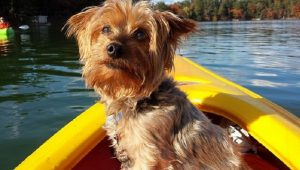 30 Dogs Who Love Boat Rides [GALLERY]