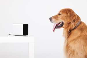 PetCube Interactive WiFi Camera For Dogs And Cats REVIEW