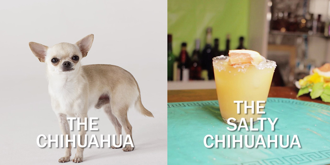 salty-chihuahua copy