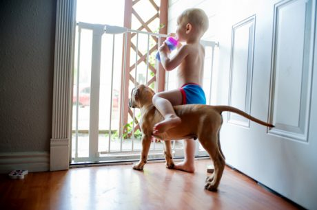 10 Safety Tips For Children Who Live With Dogs