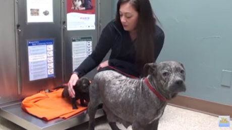 Homeless Mama Dog And Pup Transformed [VIDEO]