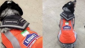 Lowes Makes Adorable Vest And Name Tag For Employee's Support Dog