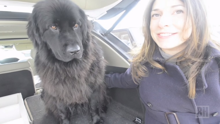 Leah Bardes sits next to Veda the Newfoundland