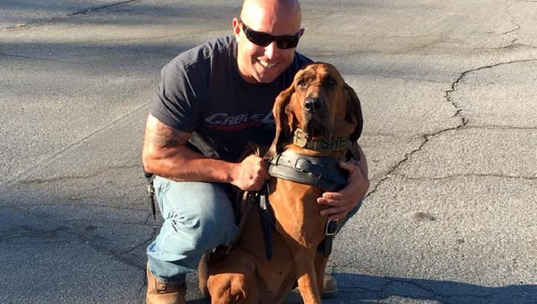 Underdogs | The Bloodhound's Amazing Sense of Smell ...