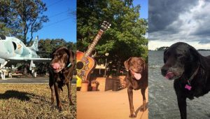 Dog With Cancer Goes For Last Epic Road Trip With Her Human