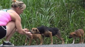 Hope For Paws Rescuing Dogs In The Costa Rican Jungles [VIDEO]
