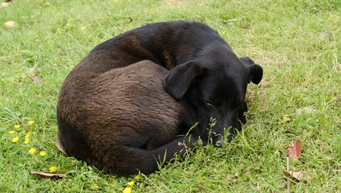 dog curled up on grass
