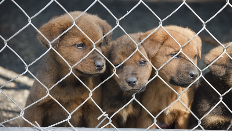 Puppies at a rescue shelter. Quite a sad expression on the middle puppy.