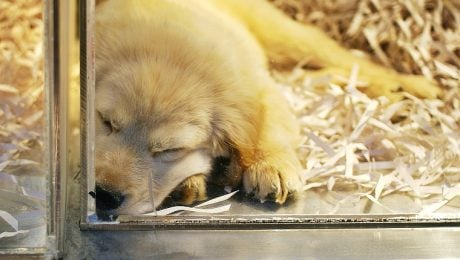 New Jersey Senate Wants To Make Pet Stores Sell Rescue Animals Only