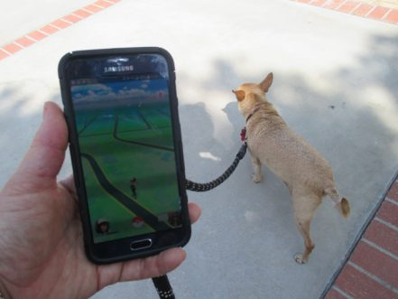 Pokemon GO Turns Walking Your Dog Into A Virtual Video Game Adventure