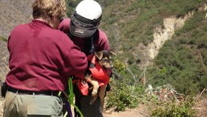 Hero Animal Control Officer Rappels 100 Feet Down Into Ravine To Save A Puppy