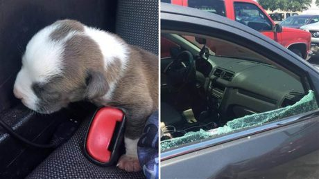 Newborn Puppy Rescued From Hot Car: Heat Index 108