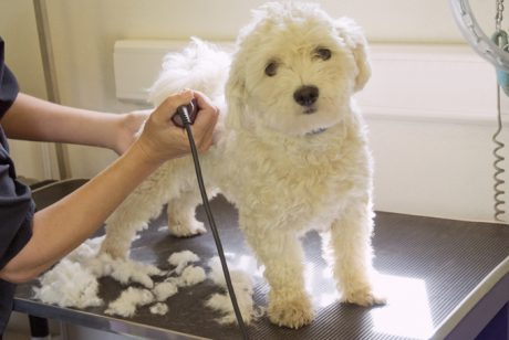 Dear Aunt Labby: Should I Shave My Dog For Summer?