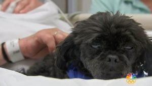 Dogs Help People Bounce Back In The ICU [VIDEO]