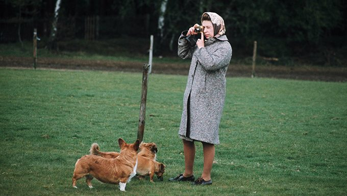 queen takes pictures with corgis in field