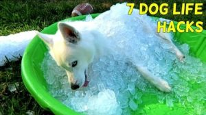 7 Simple Life Hacks For Your Dog [VIDEO]