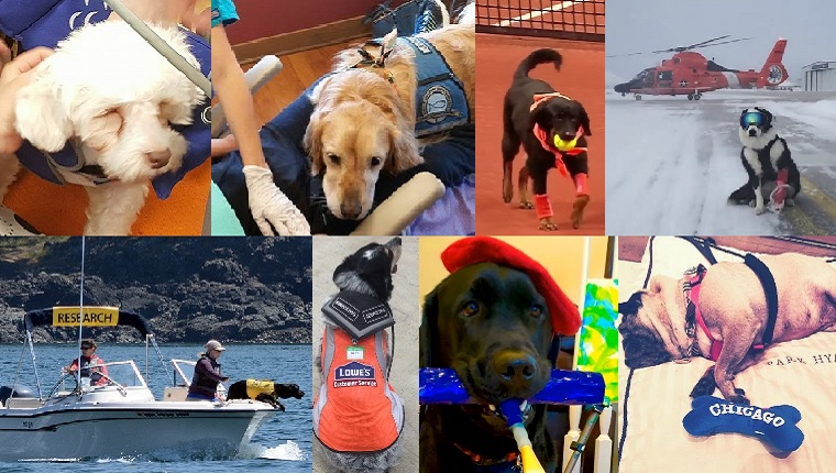 Happy Labor Day 8 Dogs With The Most Unique Jobs Of 2016