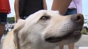 Dog Missing For A Month Found Swimming In The Middle Of A Lake