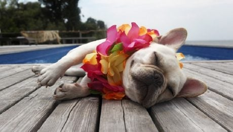 30 Of The Most Spoiled Dogs Ever Celebrating National Dog Day [GALLERY]
