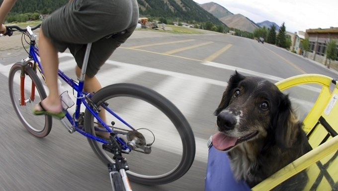 Woman riding bike with dog in carriage, Idaho.