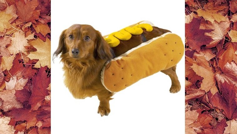 dog-costumes-2016-hotdog