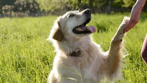 Caring For Your Dog's Paws: 8 Tips