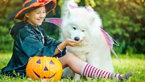 10 Fun Halloween Dog Treats For Trick-Or-Treater Pups