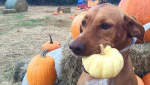 7 Fun Things To Do With Your Dog This Fall