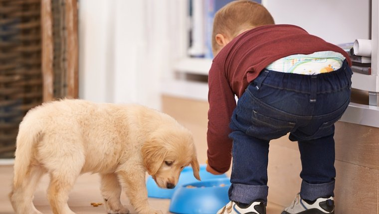 Shot of a little boy feeding a puppy