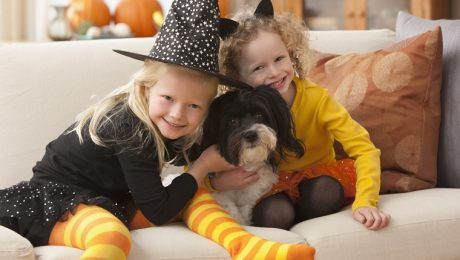 Halloween Noise Anxiety In Dogs And What You Can Do About It