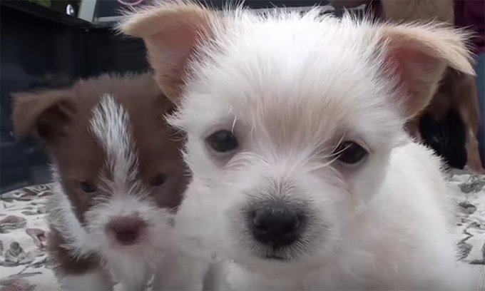 Mama Dog And Puppies Ditched In Parking Lot - Dogtime