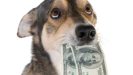 Dear Labby: My Dog Ate My Money! What Should I Do?